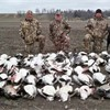 SHOW ME SNOW GEESE